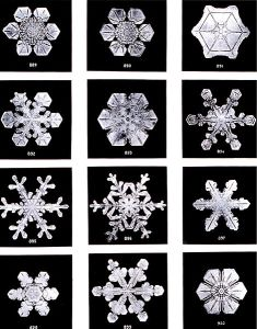 Snowflakes by Wilson Bentley with D6 symmetry group.